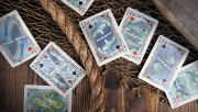 Sea Creatures Deck (Bicycle Colorized) Playing Cards