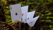 Wood Element (White) Playing Cards